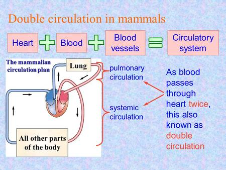 Lung All other parts of the body The mammalian circulation plan Double circulation in mammals Heart Blood Blood vessels Circulatory system pulmonary circulation.