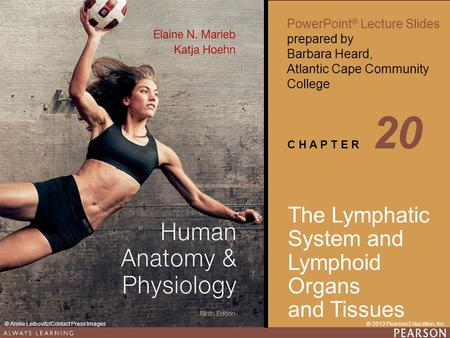 20 The Lymphatic System and Lymphoid Organs and Tissues.