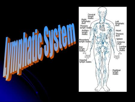 Lymphatic System Works with the circulatory system Works with the circulatory system Removes waste and excess fluids from the body tissues Removes waste.
