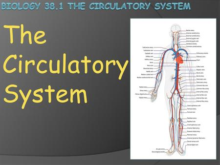 The Circulatory System. Transport and Distribution: Regardless of your activities, whether you are sleeping, exercising, reading or watching TV, your.