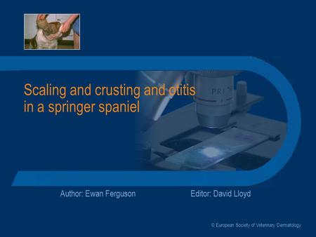 Scaling and crusting and otitis in a springer spaniel Author: Ewan FergusonEditor: David Lloyd © European Society of Veterinary Dermatology.