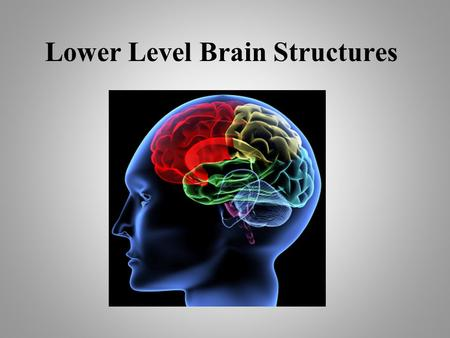 Lower Level Brain Structures. These are the inner most levels of your brain This part of the brain developed first.
