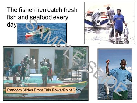Www.ks1resources.co.uk The fishermen catch fresh fish and seafood every day. SAMPLE SLIDE Random Slides From This PowerPoint Show.