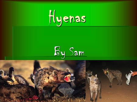 Hyenas By Sam Habitat Habitat  don't have homes  Lazy - lay in mud or in shade  70 in a clan  roam Africa  Live in the savanna or grass land.