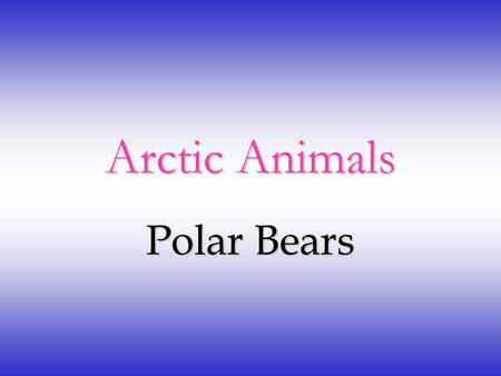 Arctic Animals Polar Bears Characteristics of Polar Bears A group of polar bears is called a Celebration of Polar Bears. Polar bears can grow to 10.