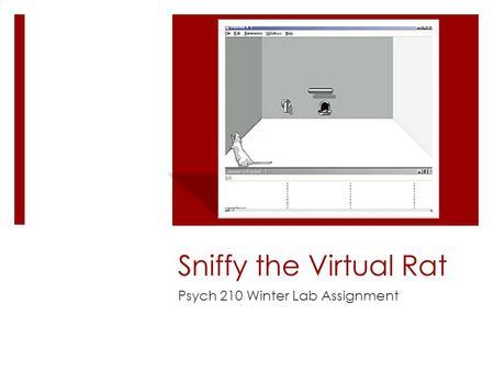 Sniffy The Virtual Rat Download Mac