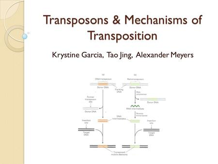Transposons & Mechanisms of Transposition