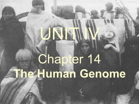 Chapter 14 The Human Genome