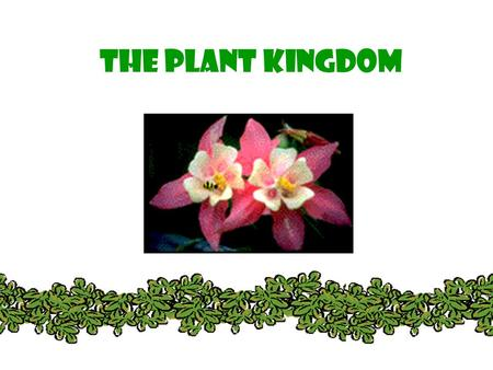 THE PLANT KINGDOM. All plants: Are Multicellular Are Autotrophic – photosynthetic Have cell walls with cellulose (that polysaccharide that we can't digest.