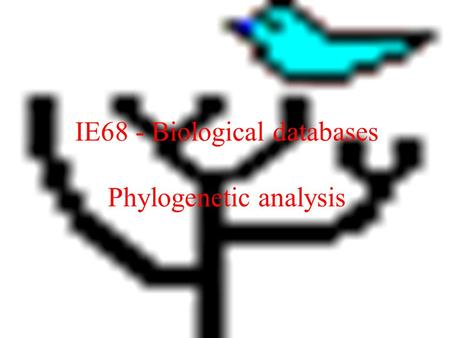 IE68 - Biological databases Phylogenetic analysis