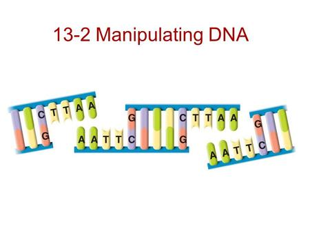 13-2 Manipulating DNA.