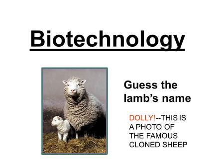 Biotechnology Guess the lamb's name