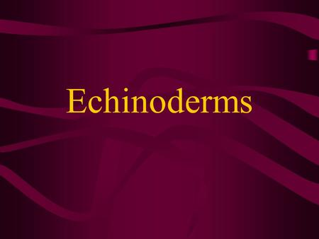 "Echinoderms The name Echinoderm comes from the Greek echinos meaning ""spiny""and derma meaning ""skin"""