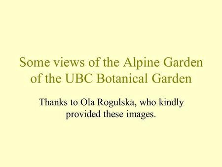Some views of the Alpine Garden of the UBC Botanical Garden Thanks to Ola Rogulska, who kindly provided these images.