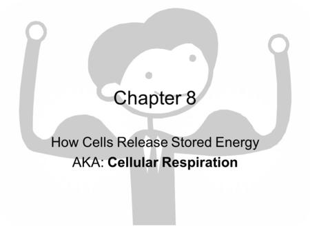 How Cells Release Stored Energy AKA: Cellular Respiration