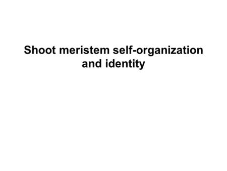 Shoot meristem self-organization and identity