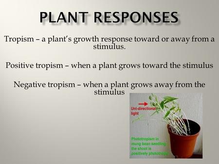 Tropism – a plant's growth response toward or away from a stimulus. Positive tropism – when a plant grows toward the stimulus Negative tropism – when a.