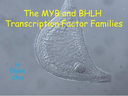 The MYB and BHLH Transcription Factor Families by Elaine Chiu.