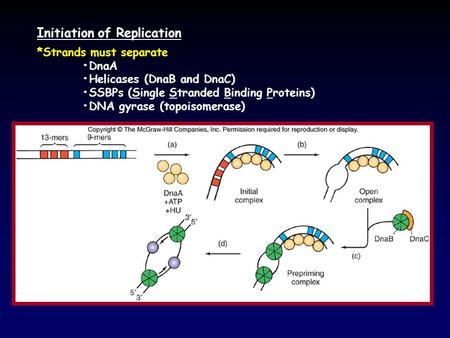 Initiation of Replication *Strands must separate DnaA Helicases (DnaB and DnaC) SSBPs (Single Stranded Binding Proteins) DNA gyrase (topoisomerase)