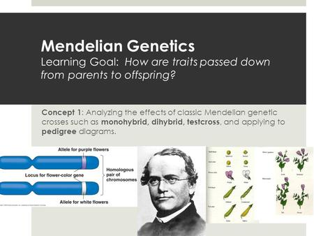 Mendelian Genetics Learning Goal: How are traits passed down from parents to offspring? Concept 1 : Analyzing the effects of classic Mendelian genetic.