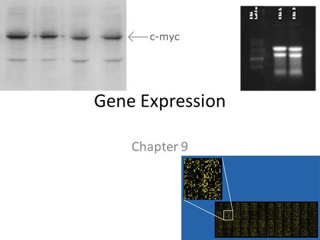 Gene Expression Chapter 9.