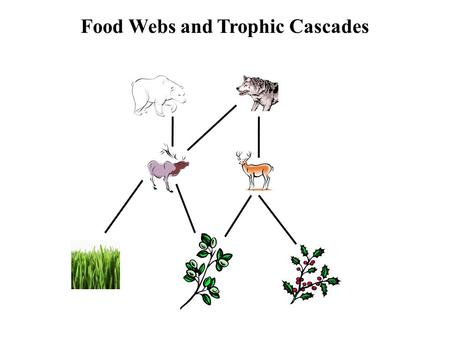 Food Webs and Trophic Cascades