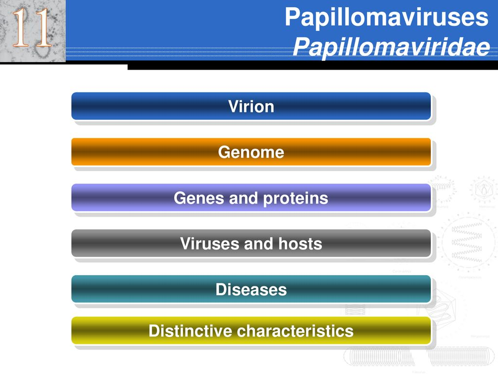 papillomaviridae ppt vaccino papilloma virus palermo