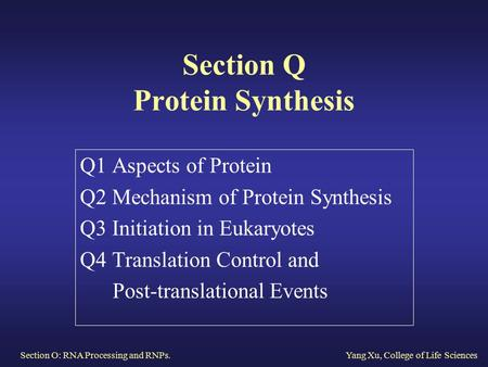 Section O: RNA Processing and RNPs.Yang Xu, College of Life Sciences Section Q Protein Synthesis Q1 Aspects of Protein Q2 Mechanism of Protein Synthesis.