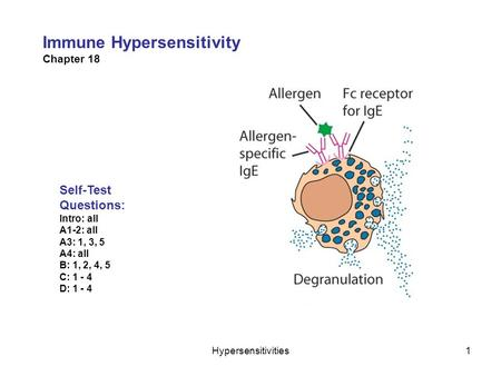 Hypersensitivities1 Immune Hypersensitivity Chapter 18 Self-Test Questions: Intro: all A1-2: all A3: 1, 3, 5 A4: all B: 1, 2, 4, 5 C: 1 - 4 D: 1 - 4.