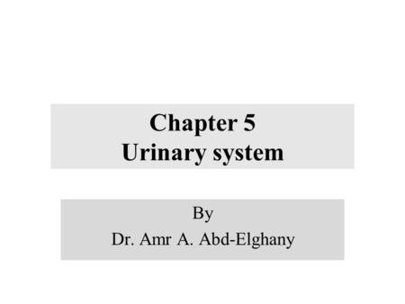Chapter 5 Urinary system