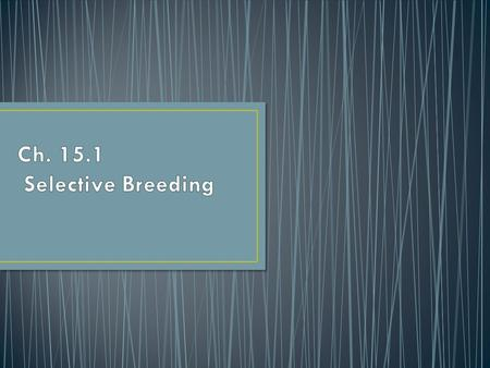 breeding of organisms to produce certain desired traits in their offspring.  =_ZbnfjLoDSY.