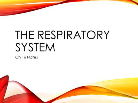 THE RESPIRATORY SYSTEM Ch 16 Notes. IDENTIFY THE FUNCTIONS OF THE RESPIRATORY SYSTEM. Obtaining oxygen and removing carbon dioxide. Cellular Respiration: