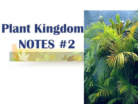 Plant Kingdom NOTES #2.