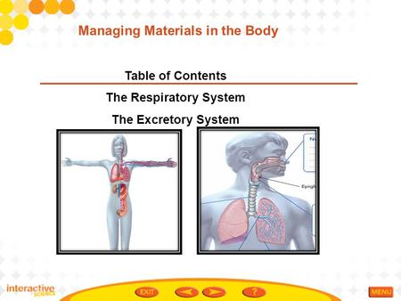 Managing Materials in the Body The Respiratory System