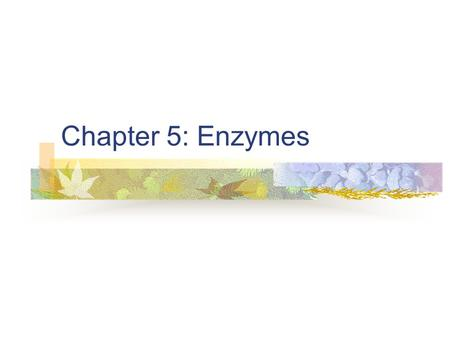 Chapter 5: Enzymes.