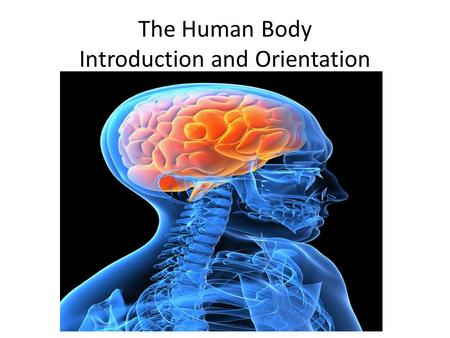 The Human Body Introduction and Orientation