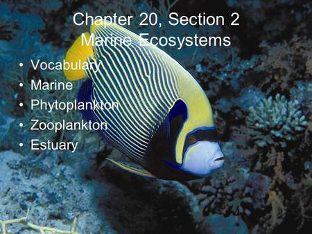 Chapter 20, Section 2 Marine Ecosystems