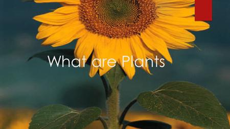 What are Plants Importance of plants WWithout plants life on earth would not exist.