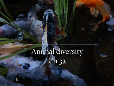 The animal kingdom extends far beyond humans and other animals we may encounter 1.3 million living species of animals have been identified There are exceptions.