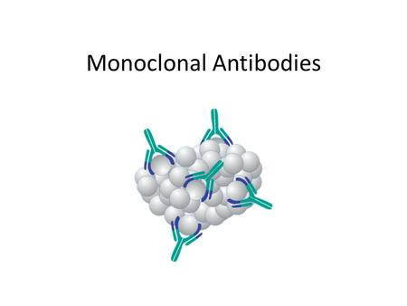 Monoclonal Antibodies. Antibodies have important uses beyond fighting infections in the body. Production of long-lasting monoclonal antibodies is a recent.