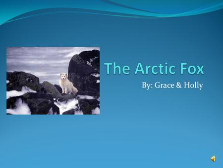 By: Grace & Holly Classification: To live in such cold places, Arctic foxes have several adaptations that allow them to survive. Their round, compact.