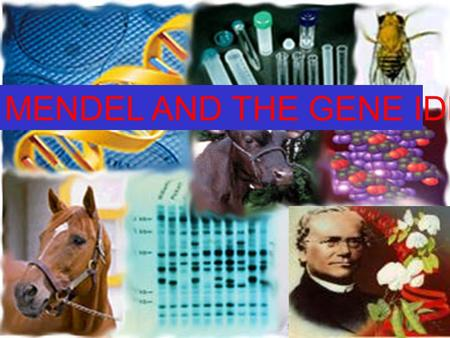MENDEL <strong>AND</strong> THE <strong>GENE</strong> IDEA