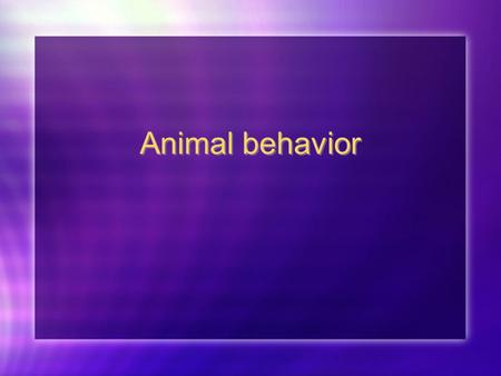 Animal behavior.