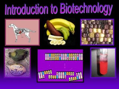 Biotechnology. LIKE History of Genetic Engineering Before technology, humans were using the process of selective breeding to produce the type of organism.