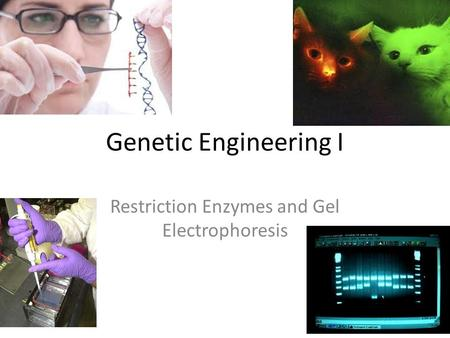Restriction Enzymes and Gel Electrophoresis