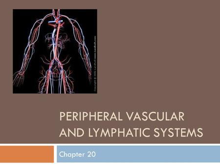 Peripheral Vascular And Lymphatic Systems
