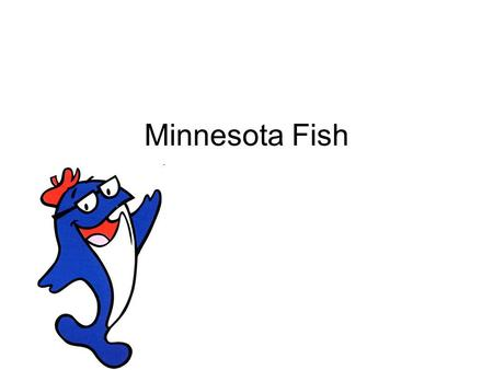 Minnesota Fish. Fast Facts: 54 Native species of fish in Minnesota Lakes 100 more species not native or living in streams.