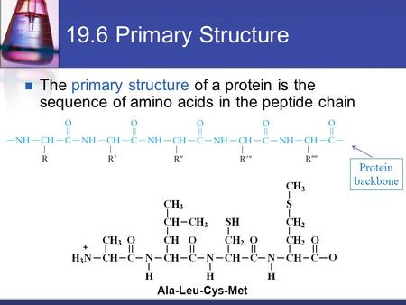 19.6 Primary Structure The primary structure of a protein is the sequence of amino acids in the peptide chain Protein backbone Ala-Leu-Cys-Met.