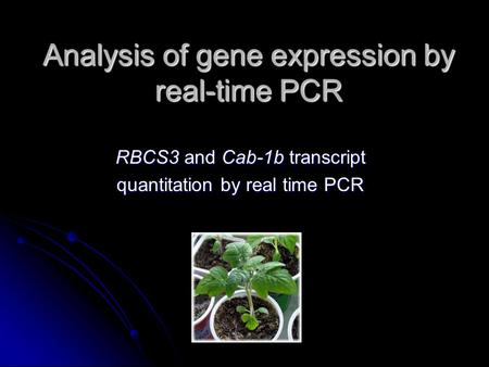 Analysis of gene expression by real-time PCR RBCS3 and Cab-1b transcript quantitation by real time PCR.