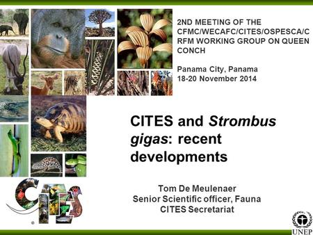 2ND MEETING OF THE CFMC/WECAFC/CITES/OSPESCA/C RFM WORKING GROUP ON QUEEN CONCH Panama City, Panama 18-20 November 2014 Tom De Meulenaer Senior Scientific.